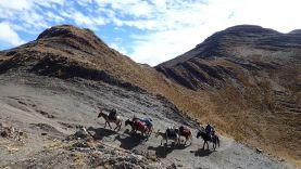 Les mules en route vers Pocpa